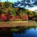 森林の紅葉を散策8