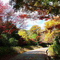 森林の紅葉を散策2