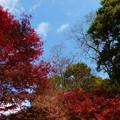 森林の紅葉を散策3