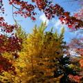 森林の紅葉を散策4