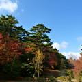森林の紅葉を散策5