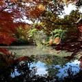 森林の紅葉を散策14