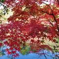 森林の紅葉を散策13