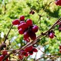 森林の紅葉を散策23