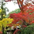静寂な境内の紅葉
