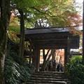 瑞宝寺公園の紅葉1-1