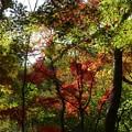 瑞宝寺公園の紅葉1-4