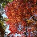 瑞宝寺公園の紅葉2-2