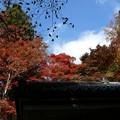 瑞宝寺公園の紅葉3-2