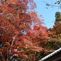 瑞宝寺公園の紅葉3-3