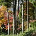 瑞宝寺公園の紅葉4-1