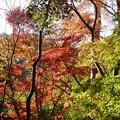 瑞宝寺公園の紅葉4-3