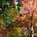 瑞宝寺公園の紅葉4-7