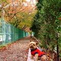 Photos: 散歩道のキティちゃん1