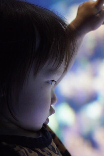 水槽を見つめる子供