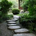 写真: 三渓園の飛び石