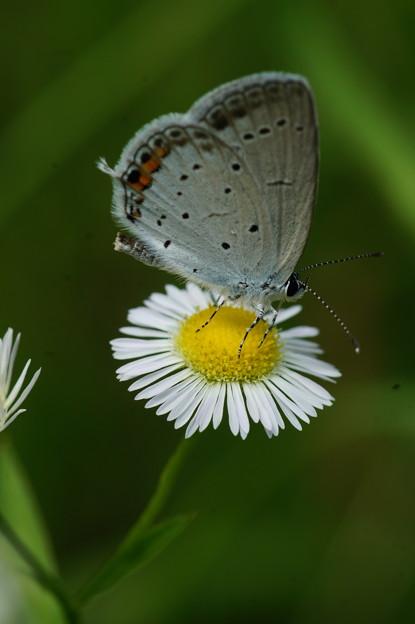 写真: 花と蝶