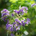 写真: 花と蟷螂