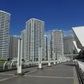 写真: パシフィック横浜
