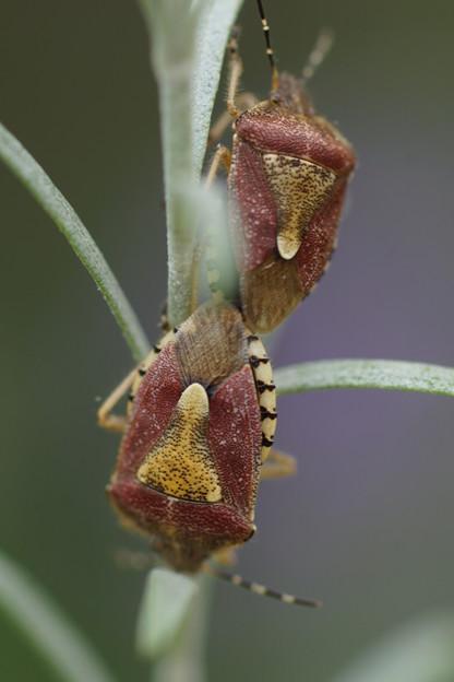 二匹の昆虫