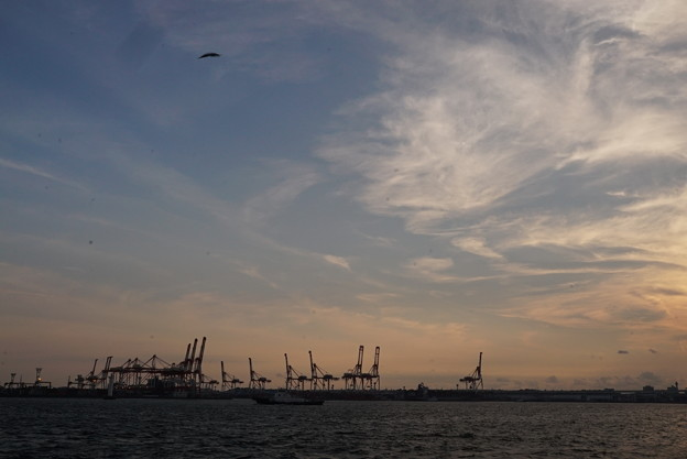 Photos: 夕暮れの港