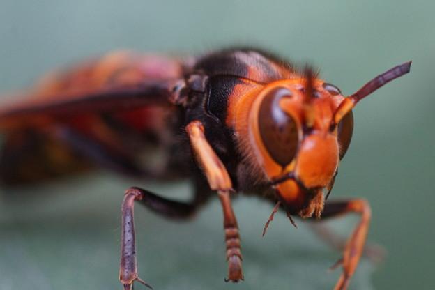 写真: スズメバチ