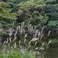 Photos: 初秋の横浜公園