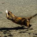Photos: 蝶に飛び付く猫