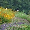 写真: 里山の花々