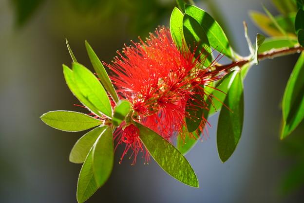 Photos: 赤いブラシ