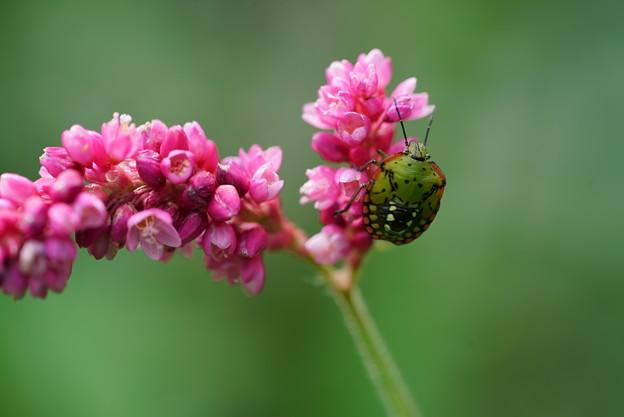 写真: 花とカメムシ