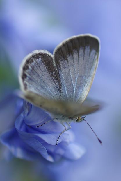 花で休む蝶