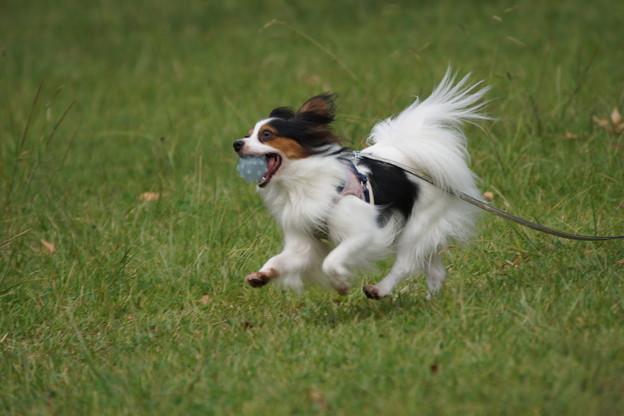 ボール咥えた犬