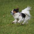 Photos: ボール咥えた犬
