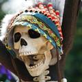 写真: ハロウィンの骸骨