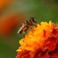 Photos: 花とアブ
