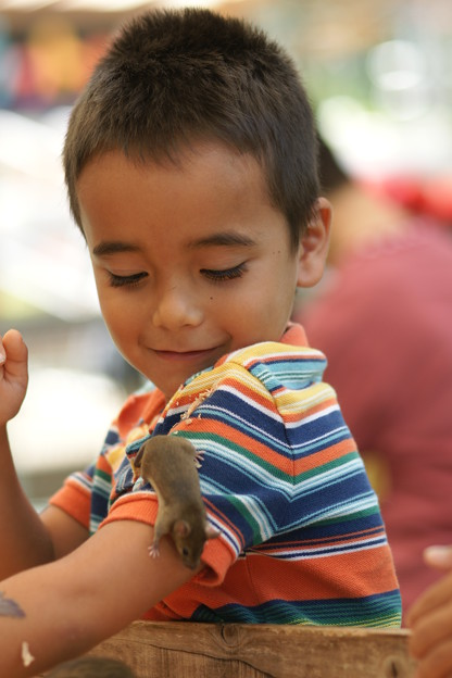 ハツカネズミと少年