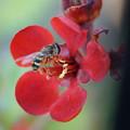写真: ボケと蜂