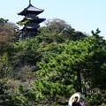 写真: 秋の三渓園