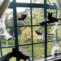 窓のハロウィン