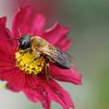 Photos: 花とハチ