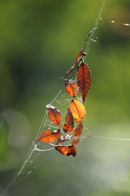 宙ぶらりんの枯れ葉