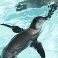 Photos: ペンギン