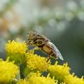 写真: 花と昆虫