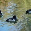 写真: 三羽の鳥