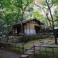 Photos: 秋の春草蘆