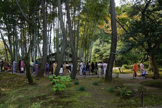 竹林の茶会