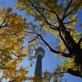 秋のマリンタワー