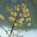 Photos: 水辺の花