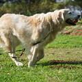 Photos: 走る犬